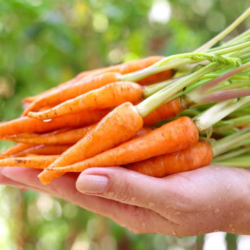 Cà rốt chứa ít calo nên đẩy nhanh quá trình giảm cân