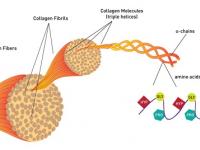 Có Nên Uống Collagen Để Trẻ Hóa Làn Da Hay Không?